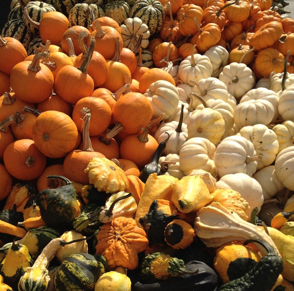 Union Square Farmer's Market. Photo taken October 2014. © blissandradiance.com